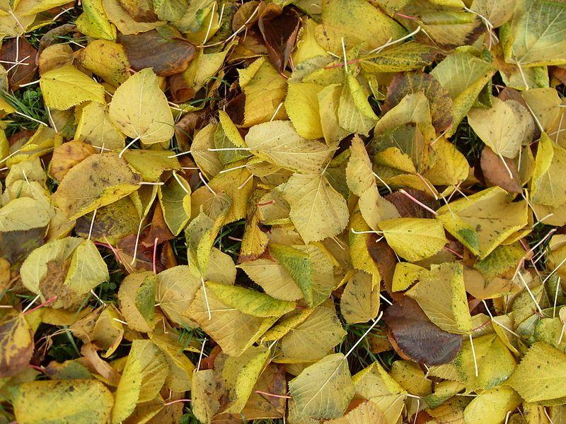 la energía del otoño