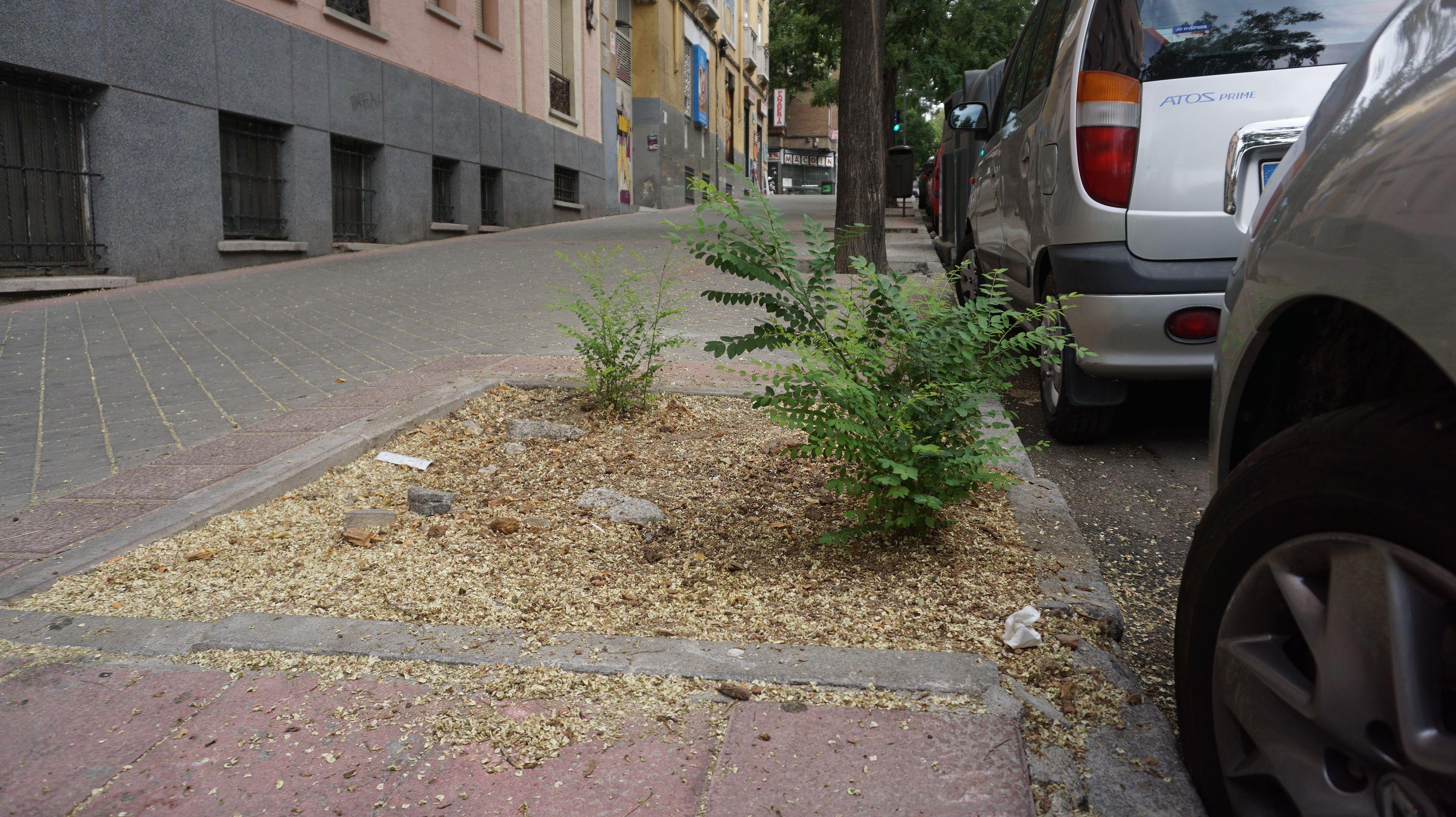 tala-ayuntamiento-madrid4