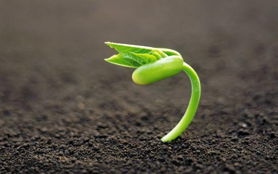 semillas-conciencia